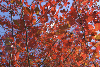 Fall_foliage_secrets