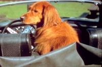 Pet_car_safety_2